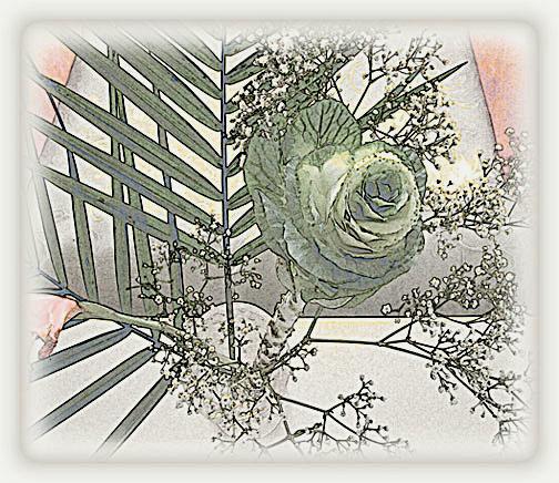 Cabbage Rose © Lisa Rivas