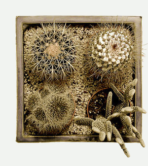 Cacti-collection-s