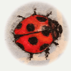 Ladybug-twirl1