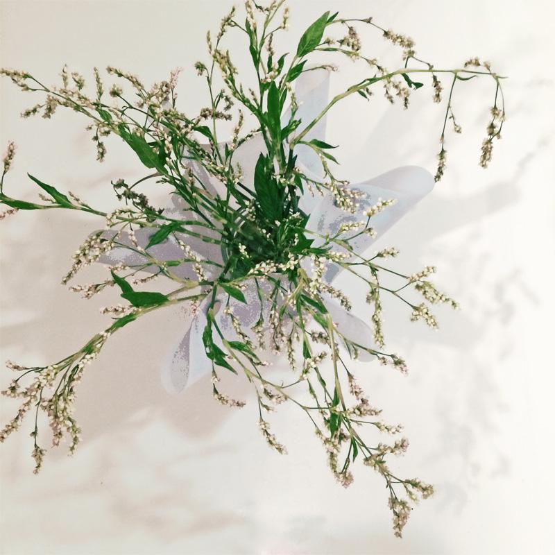 indigo-flowers LisaRivas