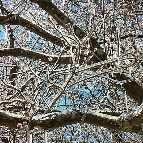 Ice Branches by Lisa Rivas