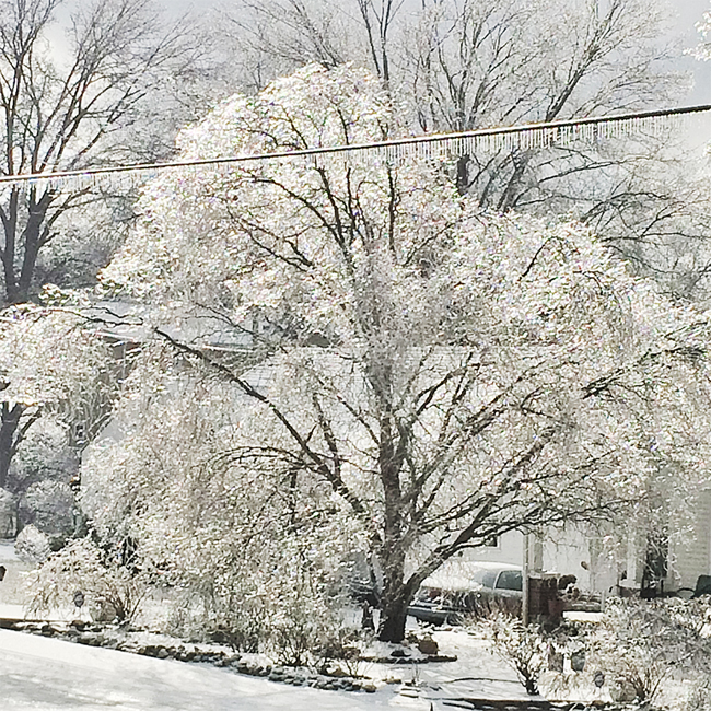 Weeping Willow in ice by Lisa Rivas