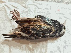 Rest in Peace dear bird - Lisa Rivas