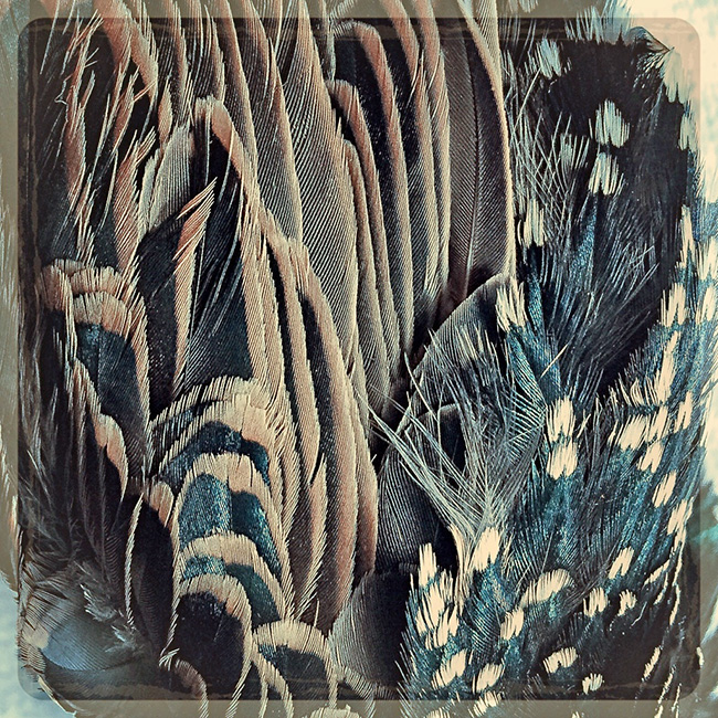 Your Feathers - Lisa Rivas