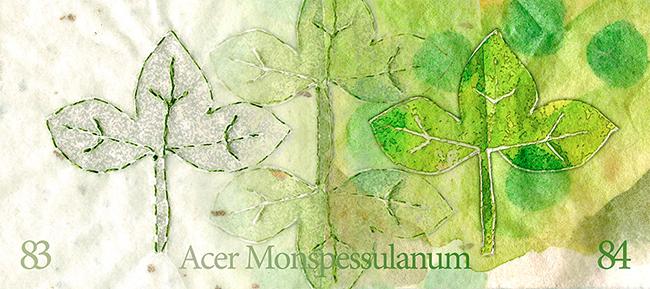 Leaf-83-84 © Lisa Rivas